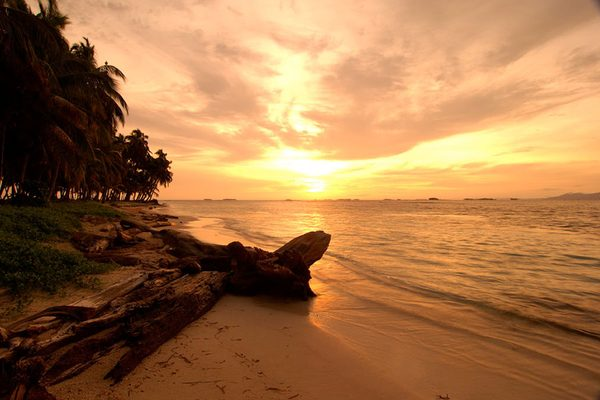 The sun setting over a beautiful beach lined with trees