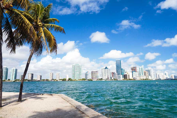 The coast of Miami with skyscrapers and palm trees