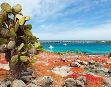 Unique fauna of the Galapagos islands